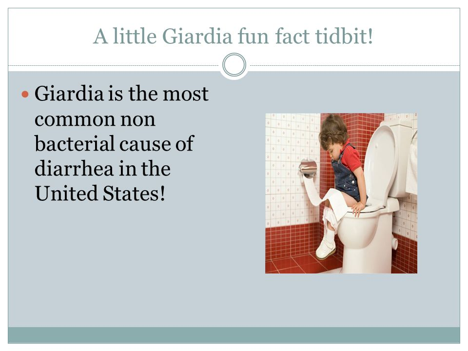 A little Giardia fun fact tidbit! Giardia is the most common non bacterial cause of diarrhea in the United States!
