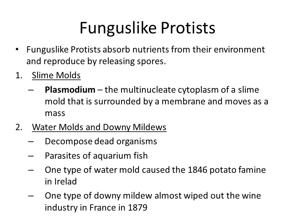 Funguslike Protists Funguslike Protists absorb nutrients from their environment and reproduce by releasing spores.