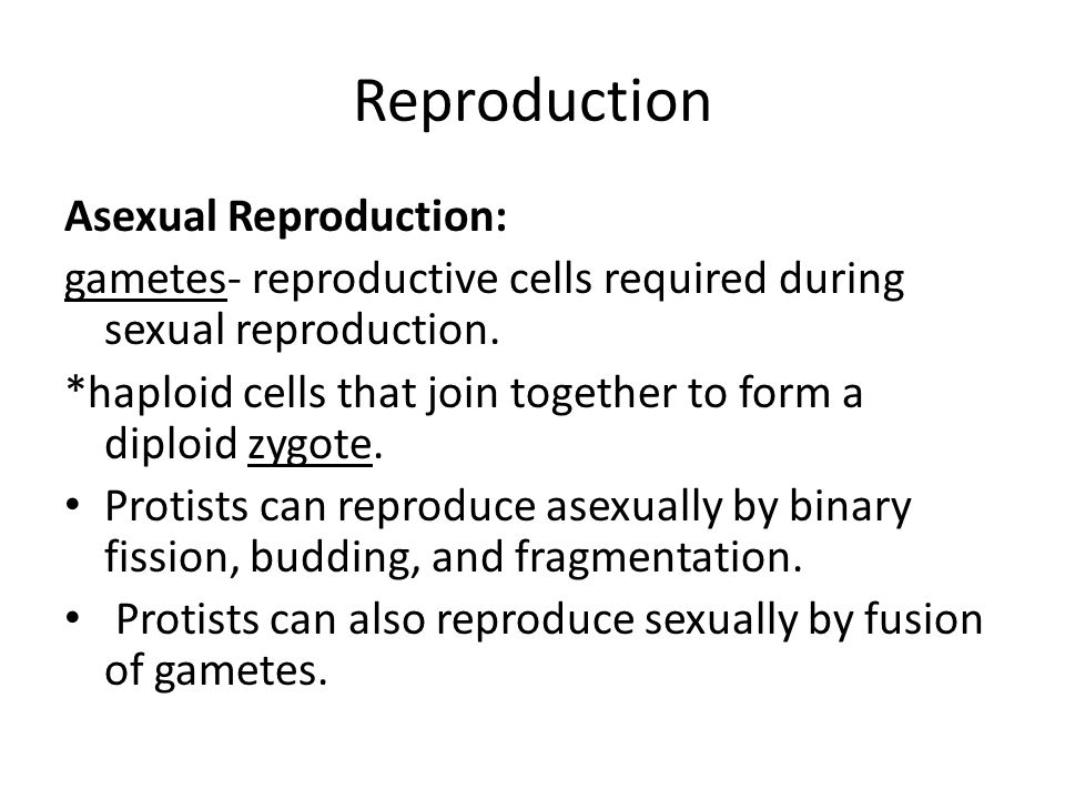 Reproduction Asexual Reproduction: gametes- reproductive cells required during sexual reproduction.