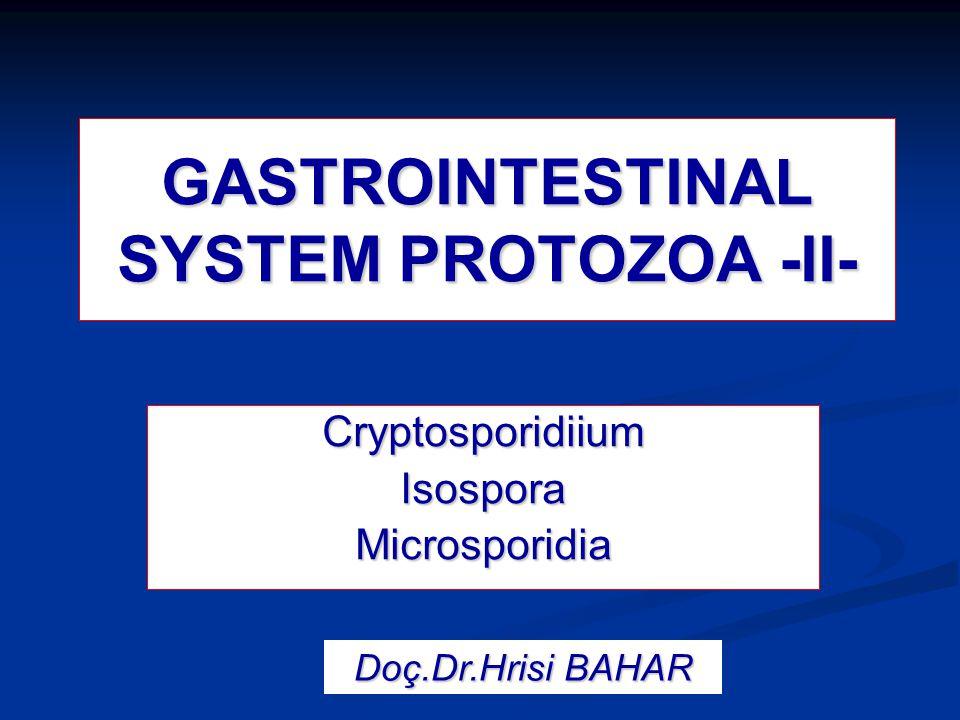Microsporidian spore