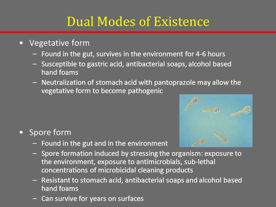 Dual Modes of Existence Vegetative form –Found in the gut, survives in the environment for 4-6 hours –Susceptible to gastric acid, antibacterial soaps