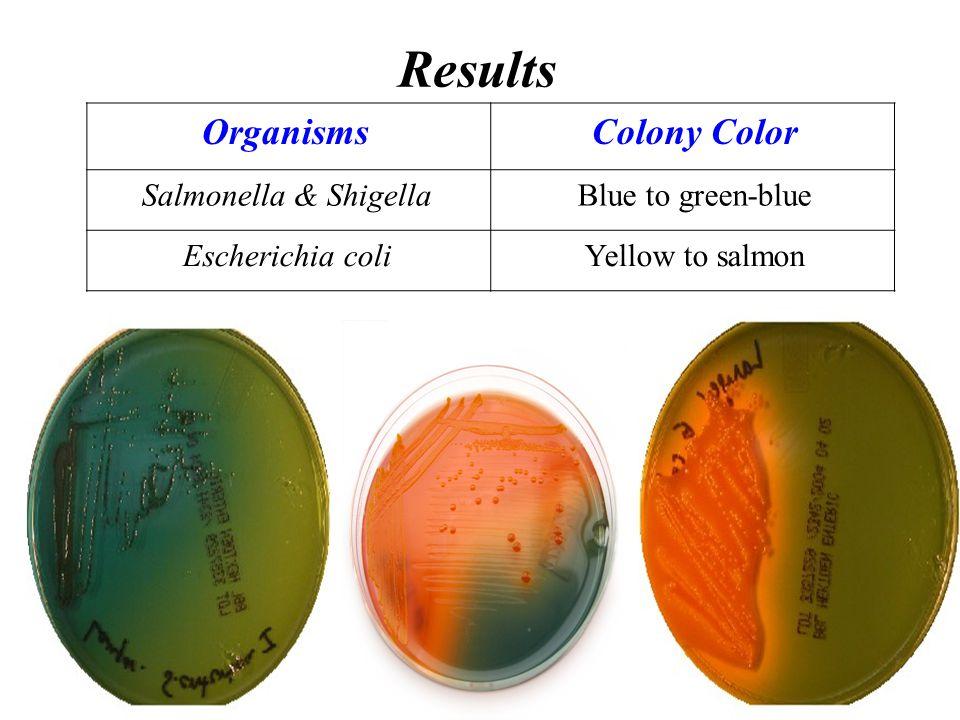Results Colony ColorOrganisms Blue to green-blueSalmonella & Shigella Yellow to salmonEscherichia coli
