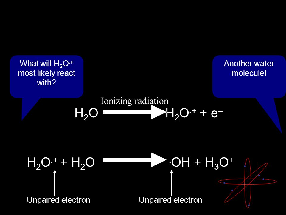 H 2 O H 2 O.+ + e – Ionizing radiation What will H 2 O.+ most likely react with.