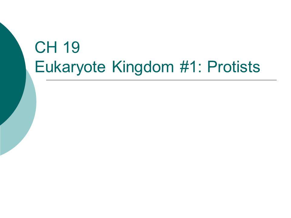 CH 19 Eukaryote Kingdom #1: Protists