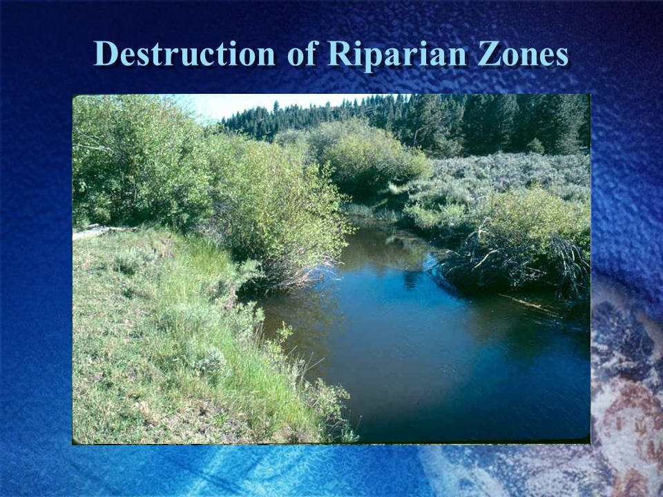 Destruction of Riparian Zones