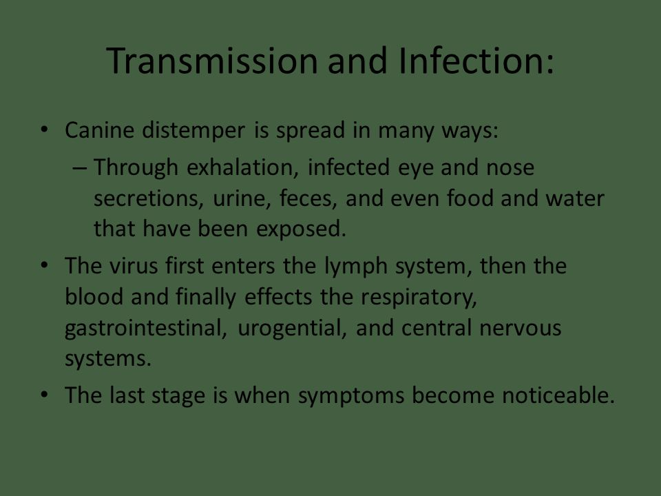 Transmission and Infection: Canine distemper is spread in many ways: – Through exhalation, infected eye and nose secretions, urine, feces, and even fo