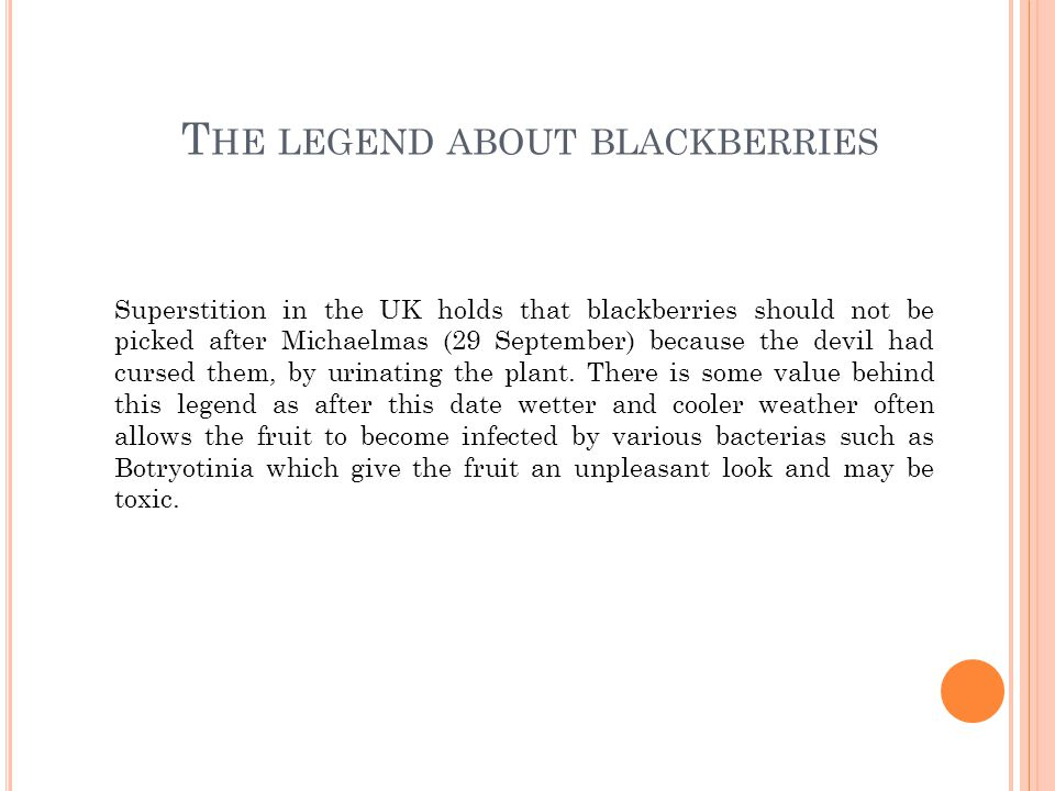 T HE LEGEND ABOUT BLACKBERRIES Superstition in the UK holds that blackberries should not be picked after Michaelmas (29 September) because the devil had cursed them, by urinating the plant.