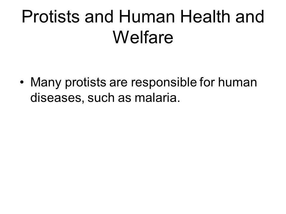 Protists and Human Health and Welfare Many protists are responsible for human diseases, such as malaria.