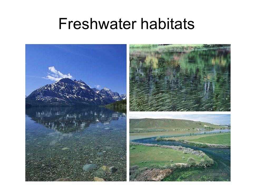 Freshwater habitats