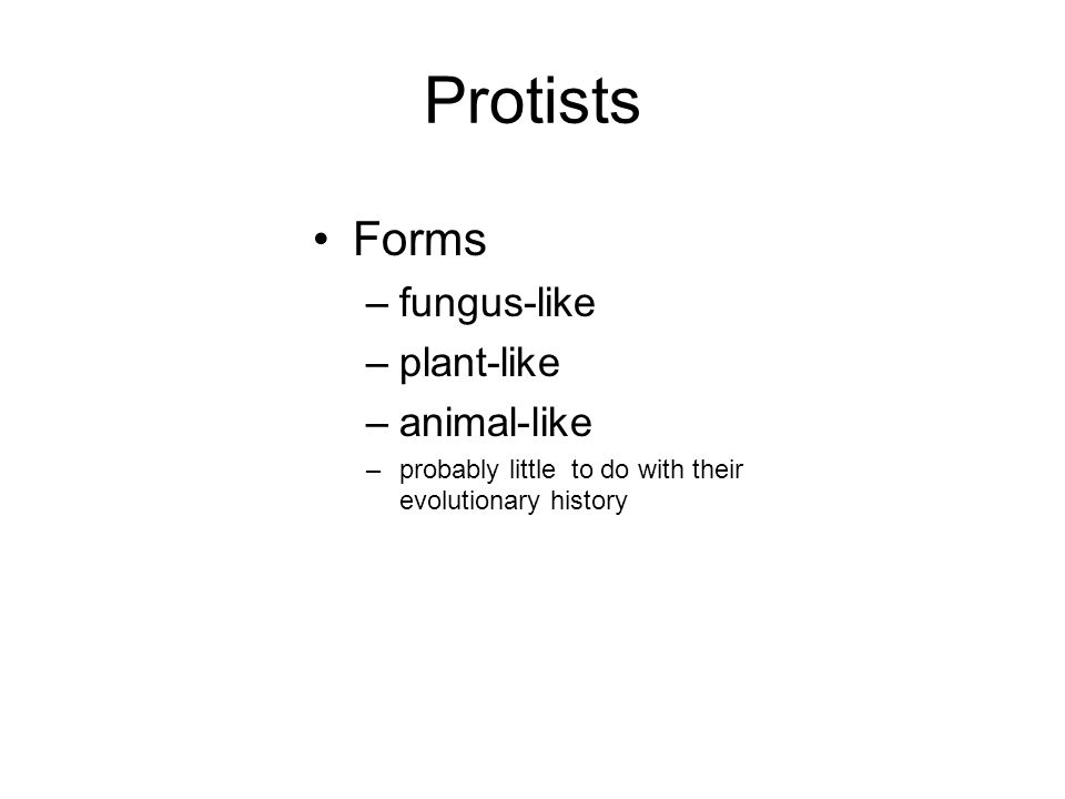 Protists Forms –fungus-like –plant-like –animal-like –probably little to do with their evolutionary history