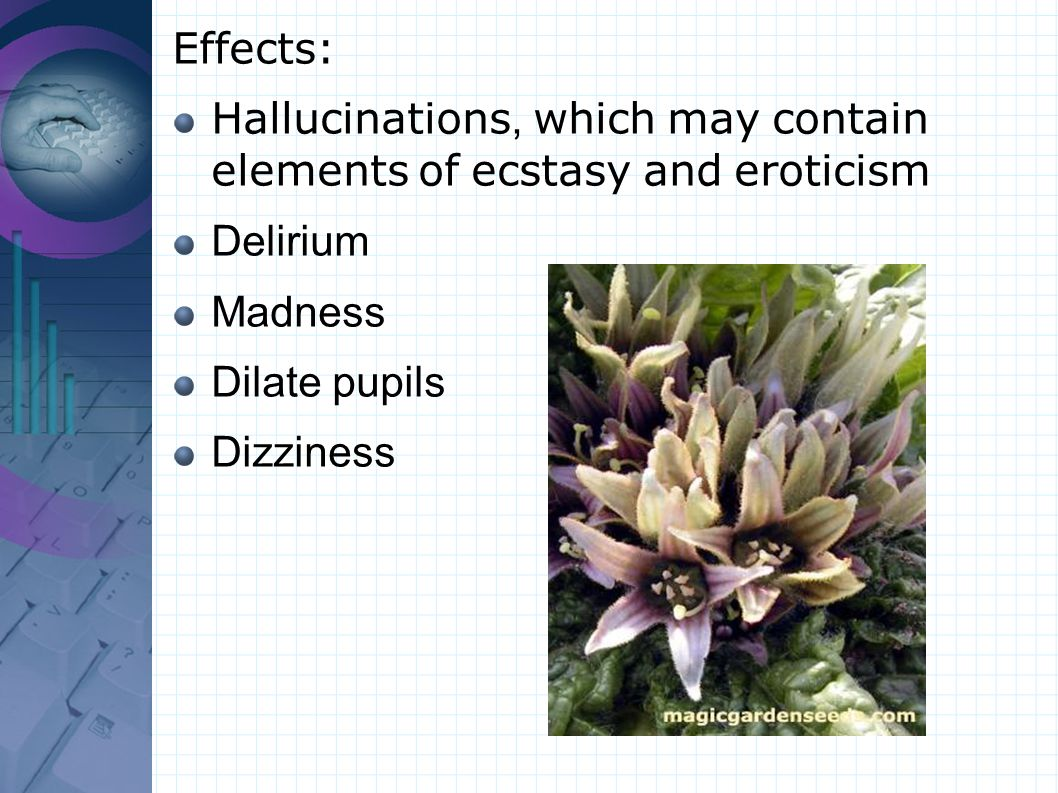 Effects: Hallucinations, which may contain elements of ecstasy and eroticism Delirium Madness Dilate pupils Dizziness
