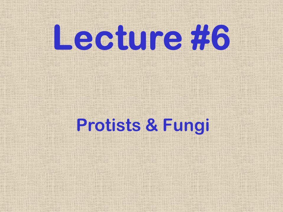 Protists & Fungi Lecture #6