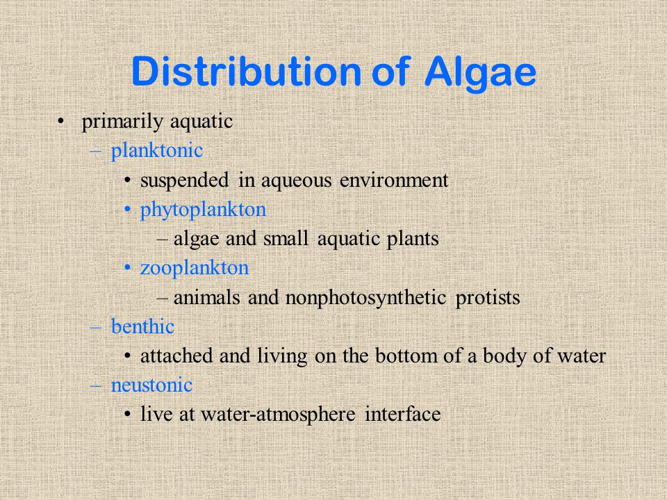 Distribution of Algae primarily aquatic –planktonic suspended in aqueous environment phytoplankton –algae and small aquatic plants zooplankton –animals and nonphotosynthetic protists –benthic attached and living on the bottom of a body of water –neustonic live at water-atmosphere interface