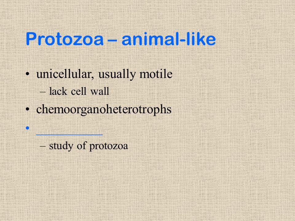 Protozoa – animal-like unicellular, usually motile –lack cell wall chemoorganoheterotrophs __________ –study of protozoa