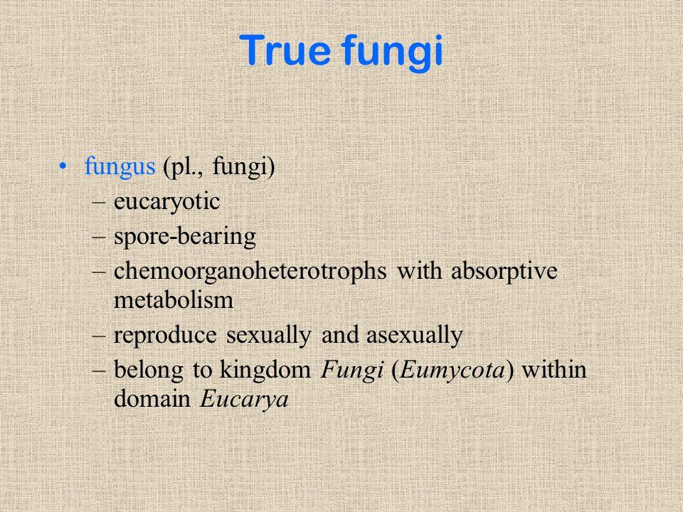 True fungi fungus (pl., fungi) –eucaryotic –spore-bearing –chemoorganoheterotrophs with absorptive metabolism –reproduce sexually and asexually –belong to kingdom Fungi (Eumycota) within domain Eucarya