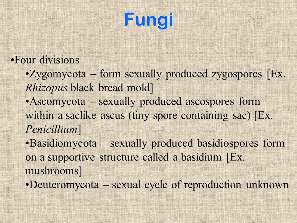 Fungi Four divisions Zygomycota – form sexually produced zygospores [Ex.