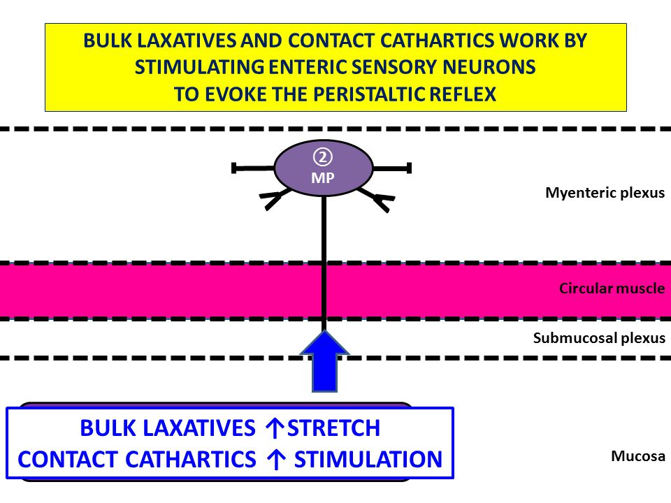 Mucosa Submucosal plexus Circular muscle Myenteric plexus 5HT Enterochromaffin Cell v v ② MP BULK LAXATIVES AND CONTACT CATHARTICS WORK BY STIMULATING ENTERIC SENSORY NEURONS TO EVOKE THE PERISTALTIC REFLEX BULK LAXATIVES ↑STRETCH CONTACT CATHARTICS ↑ STIMULATION