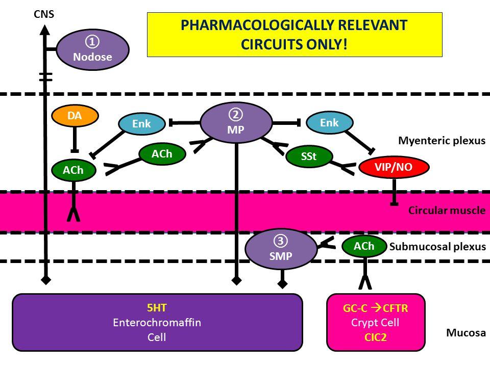 v v Mucosa Submucosal plexus Circular muscle Myenteric plexus 5HT Enterochromaffin Cell ① Nodose CNS ③ SMP ACh v DA Enk v GC-C  CFTR Crypt Cell CIC2 SSt Enk v ② MP VIP/NO v ACh v = PHARMACOLOGICALLY RELEVANT CIRCUITS ONLY!