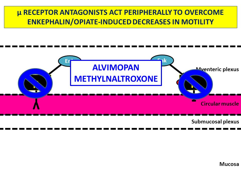 Mucosa Submucosal plexus Circular muscle Myenteric plexus ACh v Enk VIP/NO µ RECEPTOR ANTAGONISTS ACT PERIPHERALLY TO OVERCOME ENKEPHALIN/OPIATE-INDUCED DECREASES IN MOTILITY µ ALVIMOPAN METHYLNALTROXONE µ