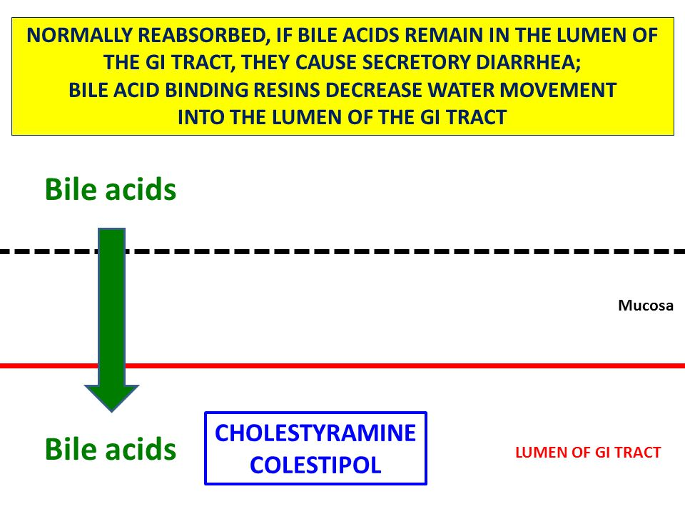 Mucosa NORMALLY REABSORBED, IF BILE ACIDS REMAIN IN THE LUMEN OF THE GI TRACT, THEY CAUSE SECRETORY DIARRHEA; BILE ACID BINDING RESINS DECREASE WATER MOVEMENT INTO THE LUMEN OF THE GI TRACT CHOLESTYRAMINE COLESTIPOL Bile acids LUMEN OF GI TRACT