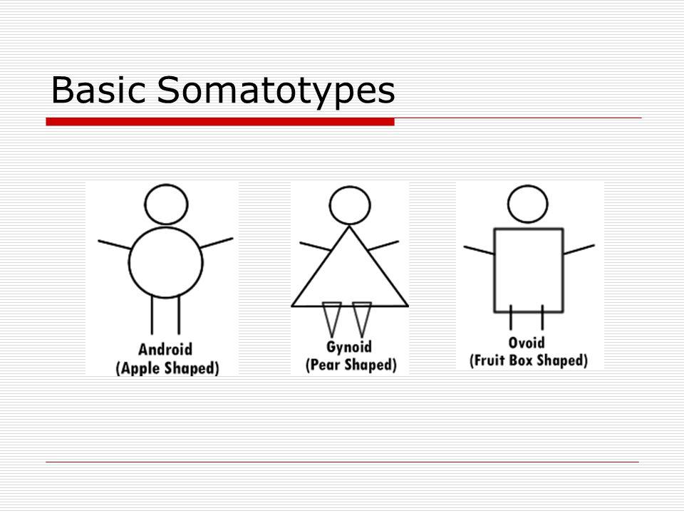 Basic Somatotypes