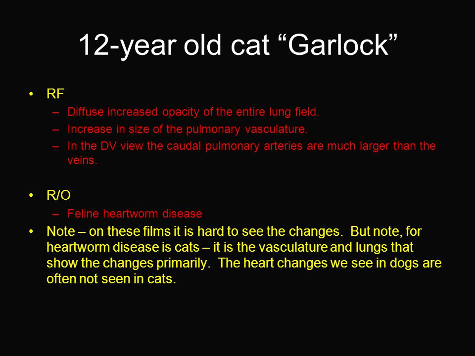 12-year old cat Garlock RF –Diffuse increased opacity of the entire lung field.