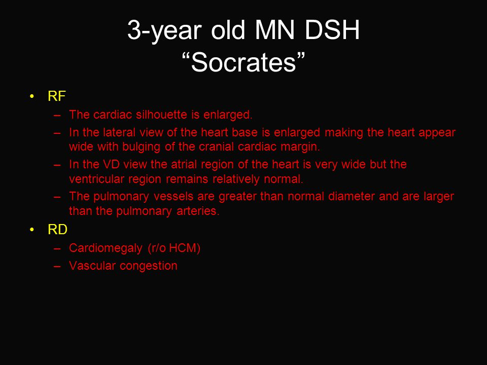3-year old MN DSH Socrates RF –The cardiac silhouette is enlarged.