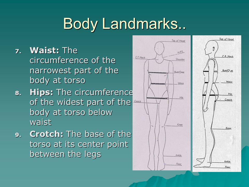 Body Landmarks.. 7. Waist: The circumference of the narrowest part of the body at torso 8. Hips: The circumference of the widest part of the body at t