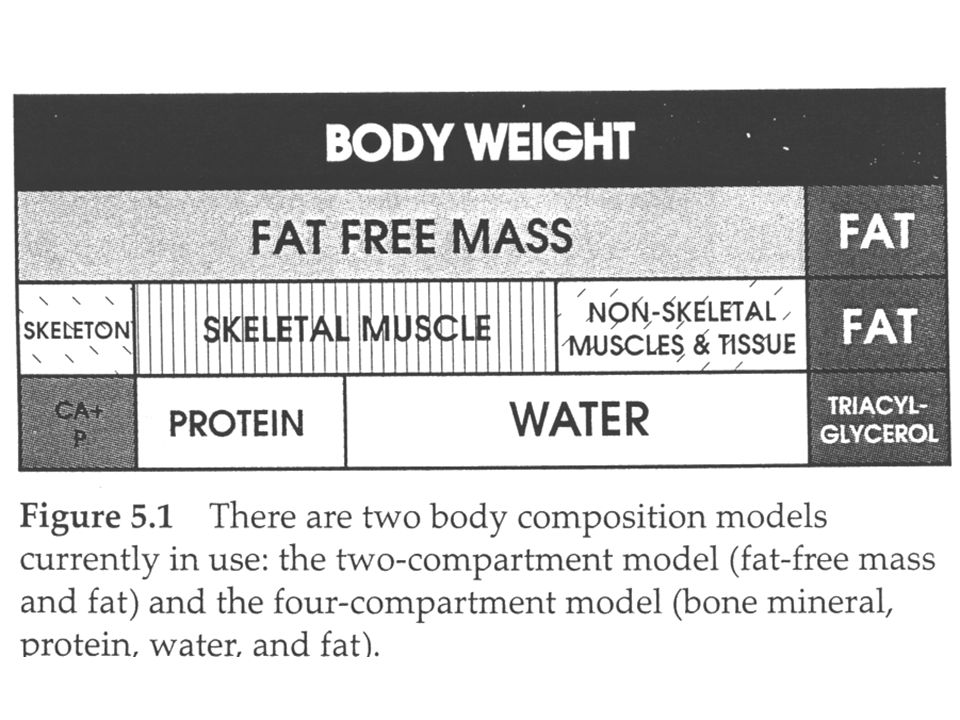 Gender Differences Females are proportionately fatter than males (as % of body mass) – Female sex hormones promote fat deposition – Male sex hormones promote muscle growth Most of the female's increase in fatness is due to an increase in the essential fat stores Males and females have similar levels of non- essential fat