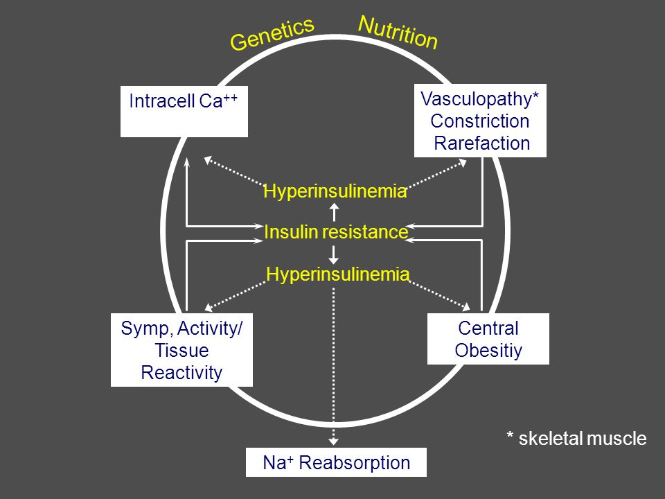 Intracell Ca ++  Vasculopathy* Constriction Rarefaction Symp, Activity/ Tissue Reactivity Central Obesitiy Hyperinsulinemia Insulin resistance Hyperinsulinemia Na + Reabsorption * skeletal muscle Genetics Nutrition