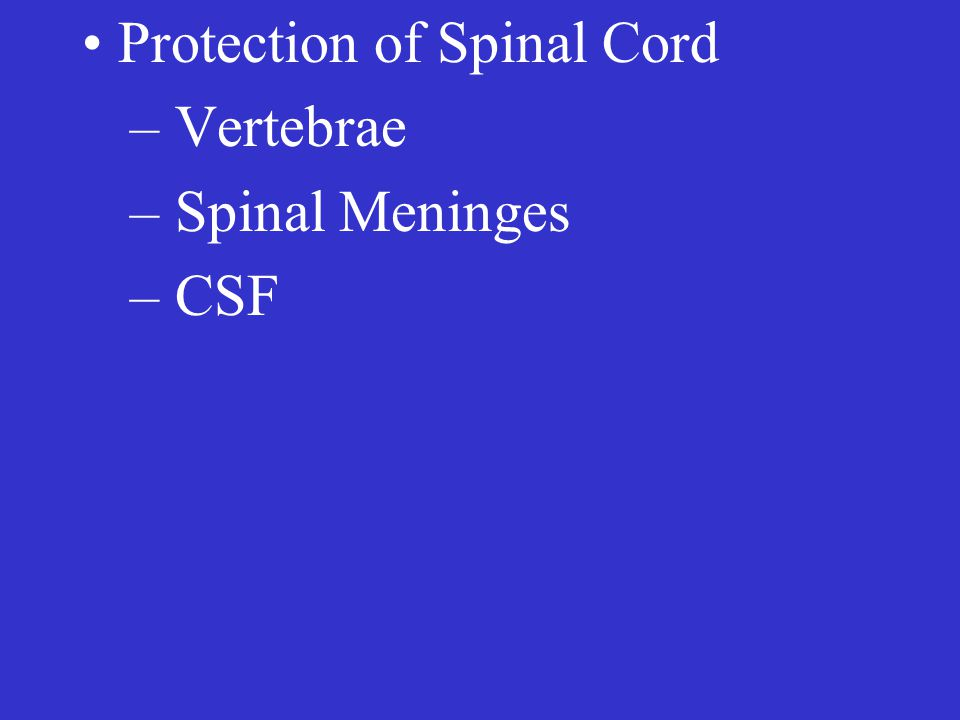 Protection of Spinal Cord – Vertebrae – Spinal Meninges – CSF