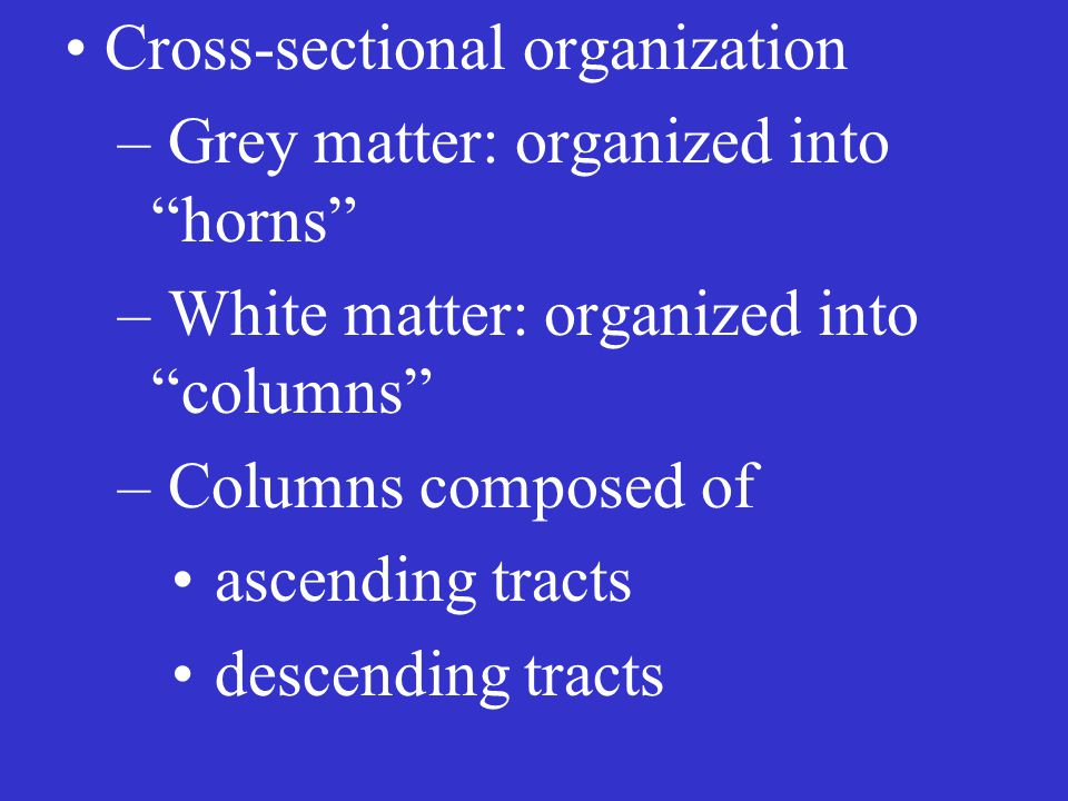 Cross-sectional organization – Grey matter: organized into horns – White matter: organized into columns – Columns composed of ascending tracts descending tracts