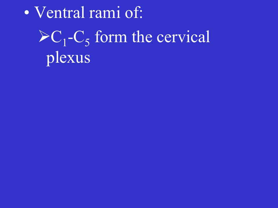  C 1 -C 5 form the cervical plexus