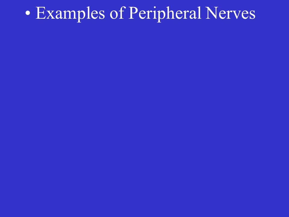 Examples of Peripheral Nerves
