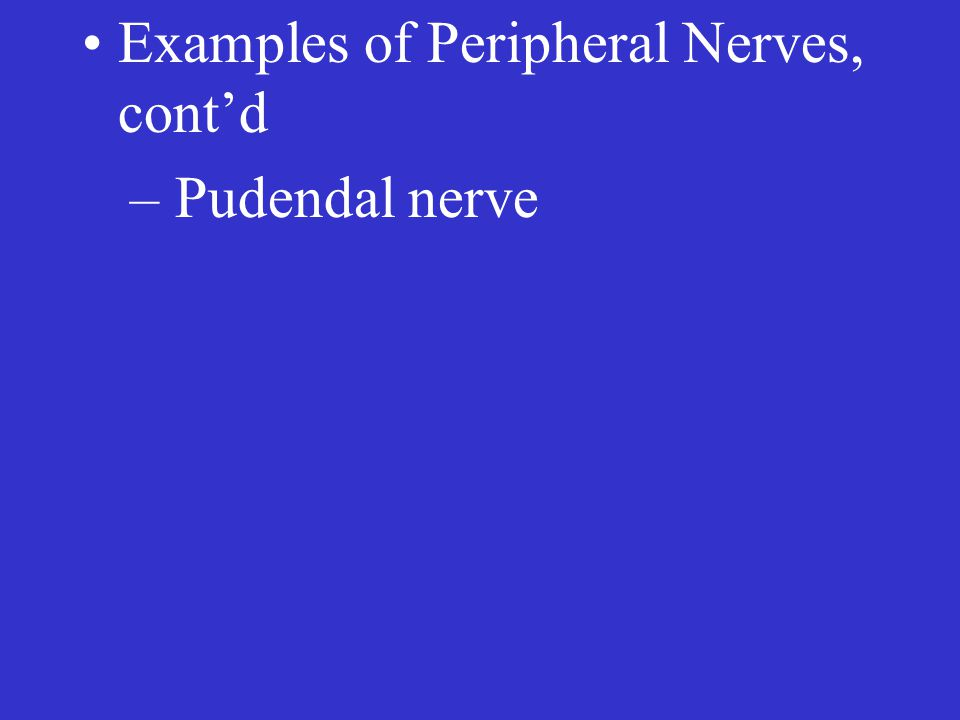 Examples of Peripheral Nerves, cont'd – Pudendal nerve
