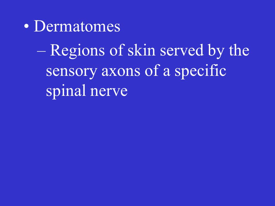 Dermatomes – Regions of skin served by the sensory axons of a specific spinal nerve