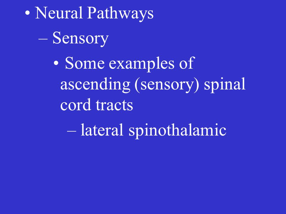 Neural Pathways – Sensory Some examples of ascending (sensory) spinal cord tracts – lateral spinothalamic