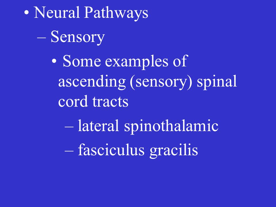 Neural Pathways – Sensory Some examples of ascending (sensory) spinal cord tracts – lateral spinothalamic – fasciculus gracilis