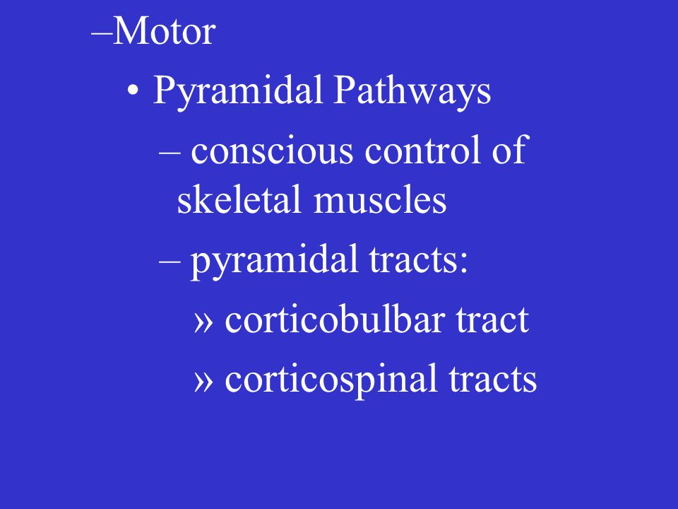 –Motor Pyramidal Pathways – conscious control of skeletal muscles – pyramidal tracts: » corticobulbar tract » corticospinal tracts