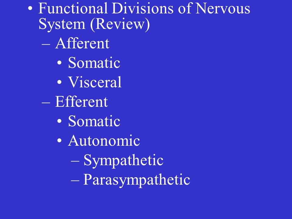 Functional Divisions of Nervous System (Review) – Afferent Somatic Visceral – Efferent Somatic Autonomic – Sympathetic – Parasympathetic