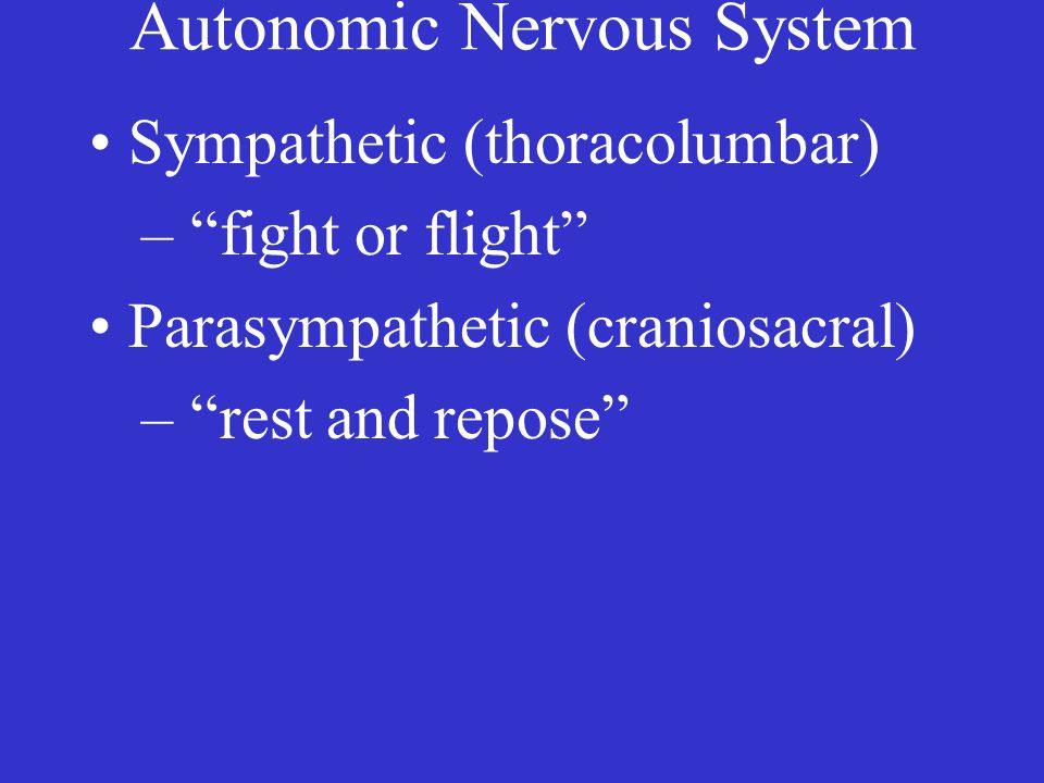 Autonomic Nervous System Sympathetic (thoracolumbar) – fight or flight Parasympathetic (craniosacral) – rest and repose