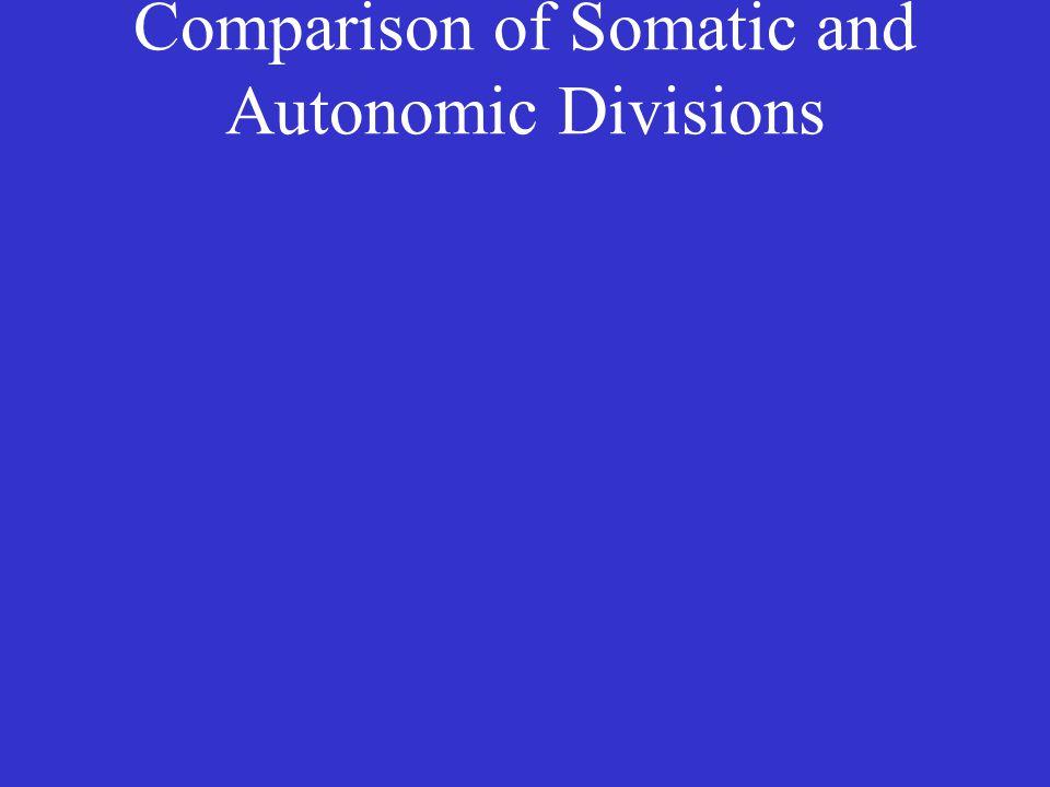 Comparison of Somatic and Autonomic Divisions
