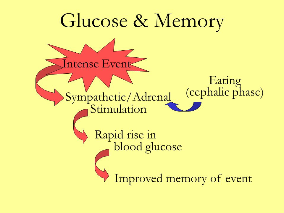 Glucose & Memory Sympathetic/Adrenal Stimulation Rapid rise in blood glucose Improved memory of event Intense Event