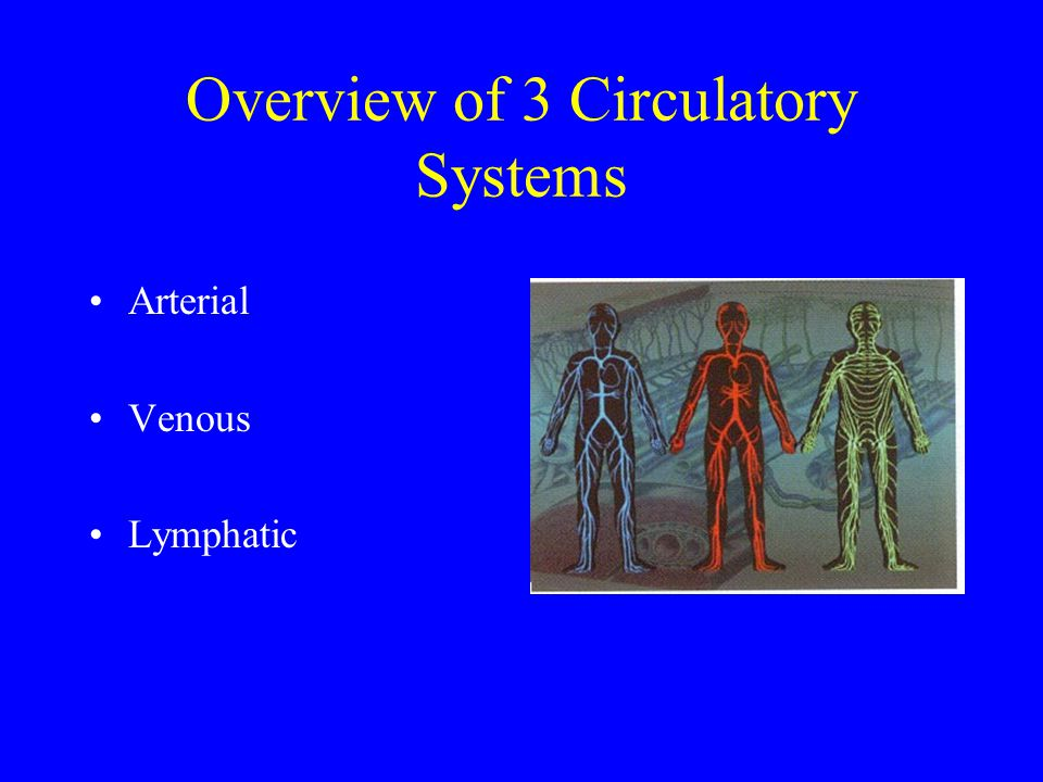 Overview of 3 Circulatory Systems Arterial Venous Lymphatic