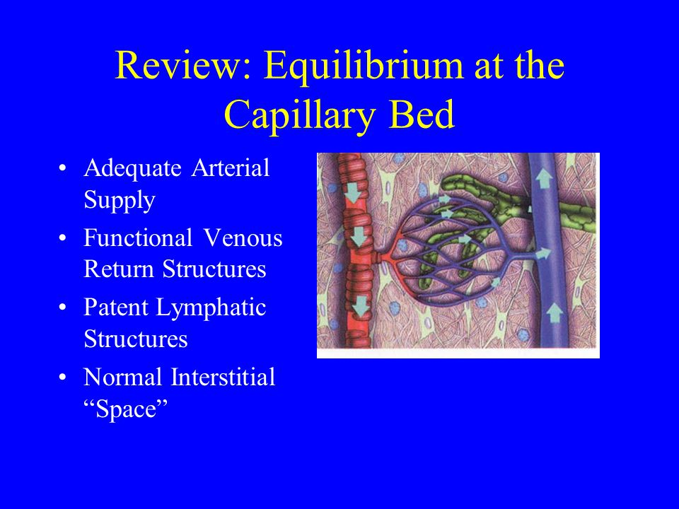 Review: Equilibrium at the Capillary Bed Adequate Arterial Supply Functional Venous Return Structures Patent Lymphatic Structures Normal Interstitial