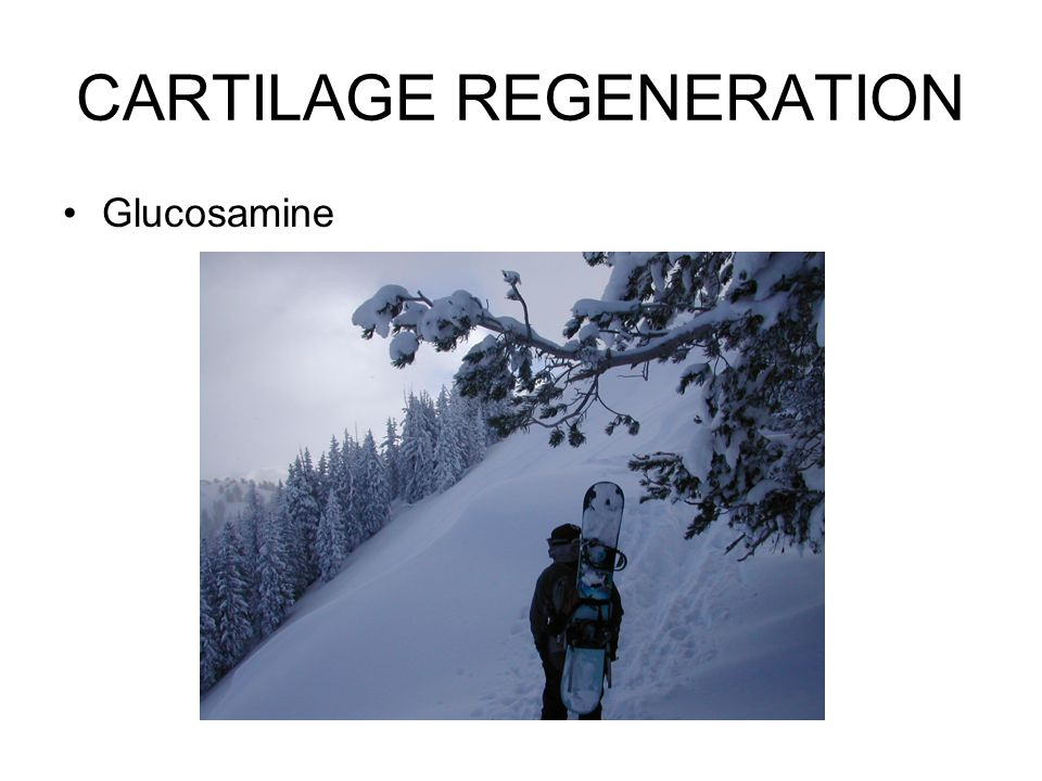 CARTILAGE REGENERATION Glucosamine
