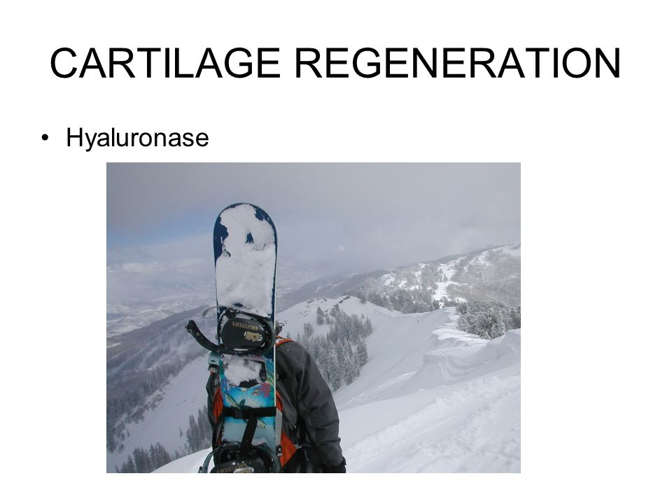CARTILAGE REGENERATION Hyaluronase