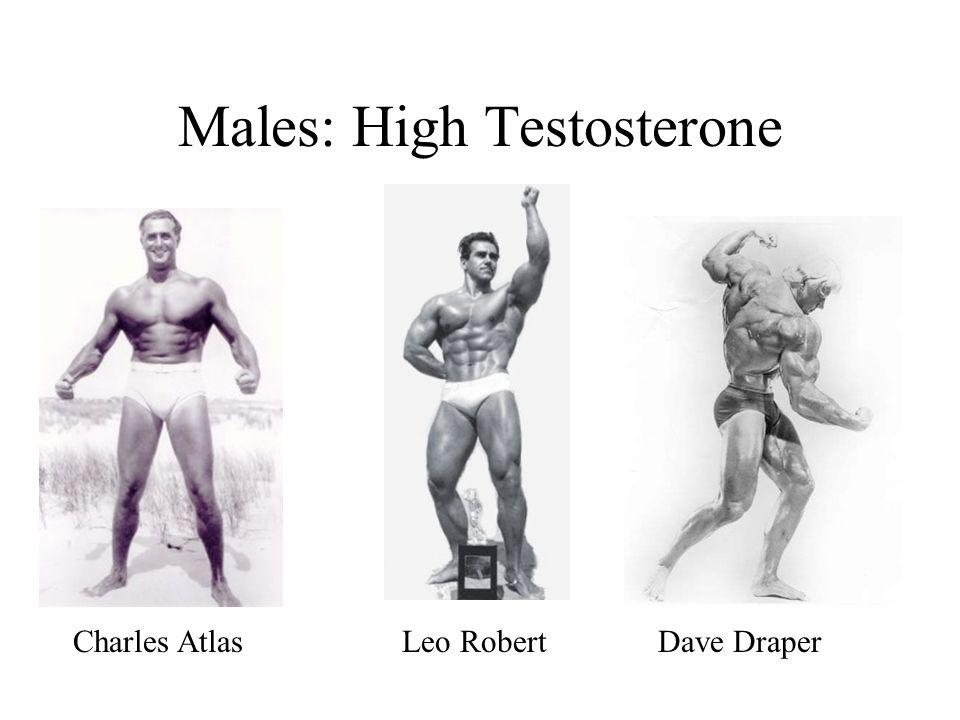 Males: High Testosterone Charles Atlas Leo Robert Dave Draper
