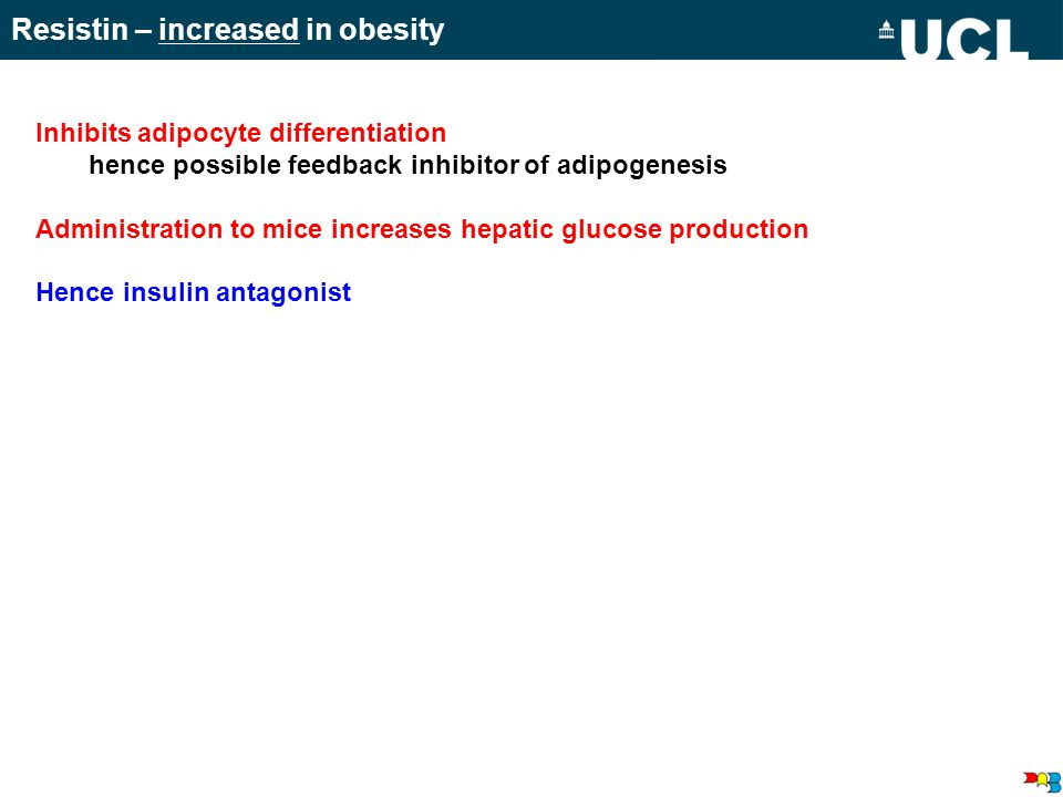 Resistin – increased in obesity Inhibits adipocyte differentiation hence possible feedback inhibitor of adipogenesis Administration to mice increases hepatic glucose production Hence insulin antagonist