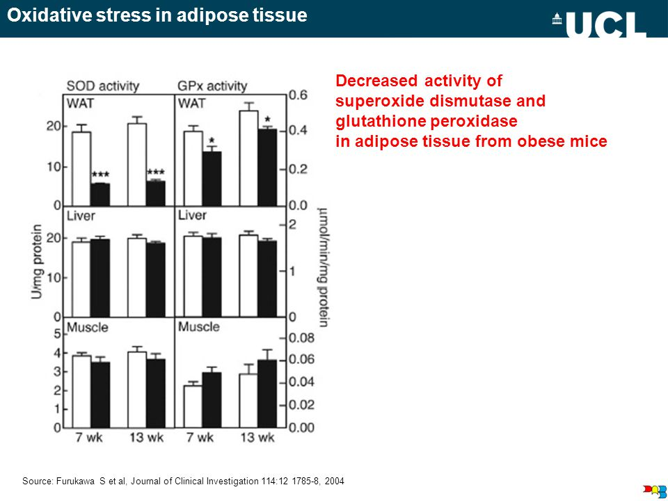 Source: Furukawa S et al, Journal of Clinical Investigation 114:12 1785-8, 2004 Decreased activity of superoxide dismutase and glutathione peroxidase in adipose tissue from obese mice Oxidative stress in adipose tissue
